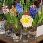 Hiacynty i mak_na_8 marca 2017_kwiaciarnia Floristica Krakow_AC