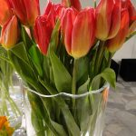 Tulipan Strong Fire_fot. J-Treder