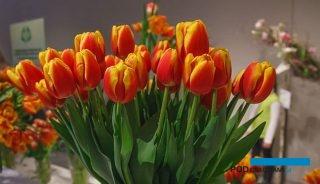 Tulipany w Wilanowie - tu: odmiana 'Dow Jones', fot. M. Podymniak