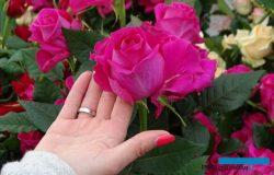 Przede wszystkim róże