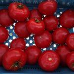 Pomidor testowany pod numerem DRTG4803
