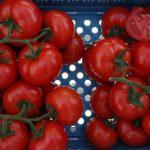 Całogronowy pomidor testowany pod numerem DRTH1002 - z segmentu tzw. dużego grona (AW)