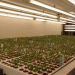 Komora doświadczalna, w której oceniane są siewki nasion odmian marki De Ruiter (AW)