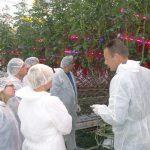 Duco de Ruiter (z prawej) z holenderskiego oddziału Monsanto udzielał informacji na temat doświadczalnej uprawy odmiany Juanita F1 z doświetlaniem LED-owym w Improvement Centre w Bleiswijk (AW)