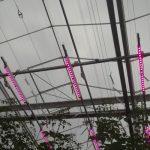 Doświadczenie ze 100% doświetlaniem LED w uprawie pomidora w Improvement Centre w Holandii (AW)