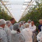 Wizyta w doświetlanej uprawie pomidorów całogronowych - Merlice F1 (AW)