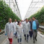 Wizyta uczestników konferencji w szklarniach GreenCoop - w pierwszym rzędzie od lewej Jacek Pańczak (Sativex), Marta Repelewicz-Szybkowska (De Ruiter), Tomasz Krasowski (Delphy) i Roman Juhász (GreenCoop), AW