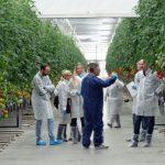 Dyskusje w czasie zwiedzania uprawy (AW)