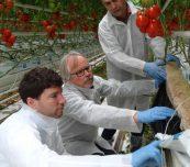 Przedstawiciele firmy Saint-Gobain Cultilene oceniają rozwój korzeni w podłożu - od lewej Emiel Bronswijk, KIm Harding i Wojciech Juńczyk (AW)