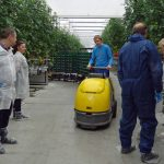 Zwożenie zebranych pomidorów do sortowni (AW)