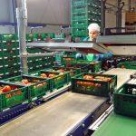 Kontrola masy pomidorów w skrzynkach (AW)