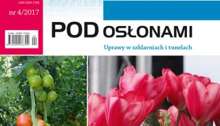 czasopismo Pod Osłonami 4/2017, tulipan 'Joanna Krause'
