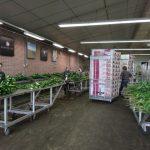 Sortowanie ściętych kwiatów lilii, które będą pakowane do giełdowych pudeł (Klaver Lily Group