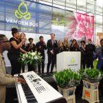 Van-den-Bos-Flowerbulbs_Dutch-Lily-Days-2017_opening