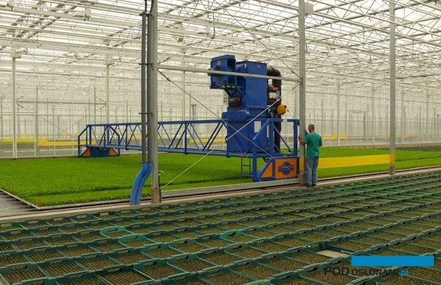 Urządzenie do przycinania rozsady selerów, Krasoń