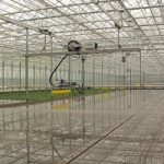 Rozsada warzyw polowych w trakcie produkcji jest podlewana poprzez ramiona zraszające z firmy Robur