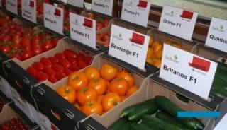 Ekspozycja nowych i znanych odmian pomidorów i ogórków marki De Ruiter w Łaszkowie