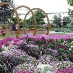 Ogrod-pokazowy_Petunia-Supertunia-Vista_oraz_Pennisetum-Vertigo_Plantpol-2017