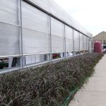 Obwódka z rozplenicy 'Vertigo' utworzona wzdłuż obiektu produkcyjnego (z otwieranym dachem_Plantpol-2017