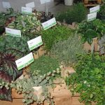 Oferta roślin doniczkowych