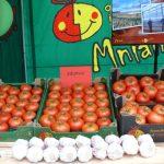 Pomidory Edamso F1 z gospodarstwa Piotra i Małgosi