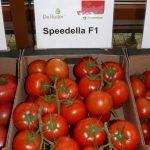 Pomidor gronowy Speedella F1