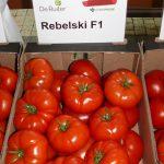 Pomidor wielkoowocowy Rebelski F1