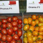 Pomidory śliwkokształtne Prunus F1 i Orama F1