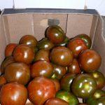 Pomidor o czekoladowych (a właściwie brązowozielonych) owocach