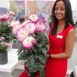 Sierkit Mol z firmy Beekenkamp prezentuje dalię LaBella Maggiore 'Rose Bicolour'