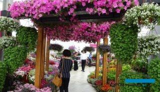 FlowerTrials-2017_PanAmericanSeed