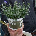 Dzwonek (Campanula) Spring Bell - markowy produkt gospodarstwa Florigrow_AC