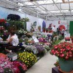 FlowerTrials 2017 w siedzibie firmy MNP Flowers (tu: prezentacje przedsiębiorstw Prudac oraz Channel Island Plants)