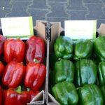 """Część owoców zbierane jest """"na zielono"""" - z prawej owoce papryki Yecla F1, z lewej Beniel F1"""
