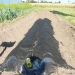 Taki system bezgelbowej uprawy papryki zaproponowała firma Haygrove - zagon wyłożony jest folią, na nim ułożona jest rura drenażowa, wszystko przykryte jest agrowłókniną, na której układa się substrat uprawowy, firma może wykonywać zgony usługowo