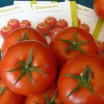 Syngenta promowała m.in. pomidory Edamso F1
