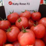 Prezentowano m.in. malinową odmianę Katy Rose F1