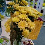 Chryzantema_Baltica-Salmon_Flower Expo Poland-2017_Deliflor