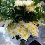Chryzantema_Vanilla-Sorbet_Flower Expo Poland_Deliflor