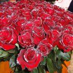 roze_NaranjoGroup_Ekwador_FlowersExpo-2017_Moskwa