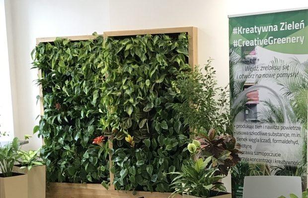 Zielone ściany i kompozycje w doniczkach w Centrum Kreatywności Targowa