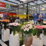 Kwiaty produkowane poza Europa to specyfika prezentacji w Vijfhuizen__IFTF_2017