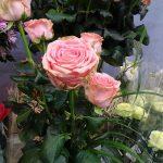 Roza-Sophia-Loren_Dummen-Orange_Royal-FloraHolland_Trade-Fair-Aalsmeer_2017