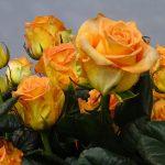 Roza-Mighty_Dummen-Orange_Royal-FloraHolland_Trade-Fair-Aalsmeer_2017