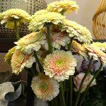 Gerbera Bolero 'BoraBora'_Royal-FloraHolland_Trade-Fair-Aalsmeer_2017