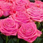 Roza_Pink Xenon_Kordes_IFTF-2017