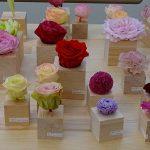 Ohchi-Nursery_preserved-flowers_Roze preparowane o co najmniej 3-letniej trwalosci_IFTF-2017