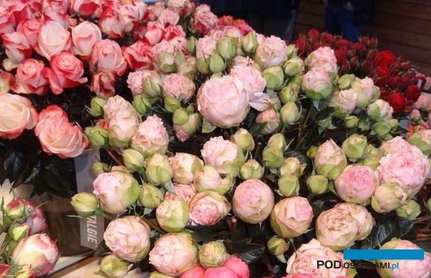 Roze z grup_Rokoko_i_Piano_Rosen-Tantau_IFTF-2017