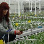 Amerykańskie studentki odbywające praktykę w firmie JMP Flowers w Stężycy: Abby Wolfe