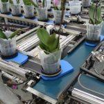 Doniczki z roślinami są automatycznie kierowane do właściwych wyjść